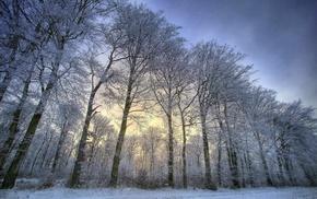 снег, природа, деревья