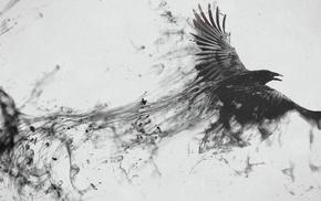 birds, raven