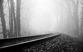 forest, railway