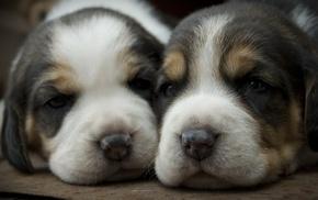 щенки, собака