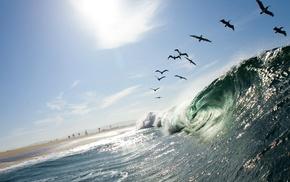 птицы, волны