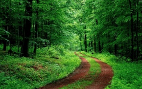 road, green, trees, nature