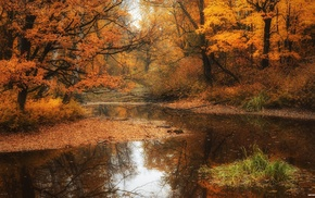 fall, river, nature, water