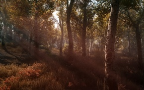 sun rays, nature, sunset, screenshots, trees, forest