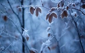 зима, лед