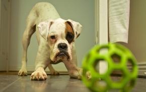 ball, on the floor, animals, dog, toys, baby animals
