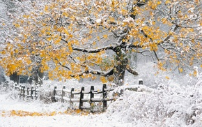 trees, nature, landscape, snow, winter, fence