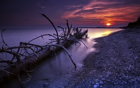 sunset, sea, Bank, nature, branch, stones