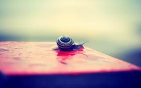 snail, water drops, macro