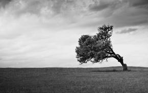 nature, clouds, landscape, trees, monochrome, field