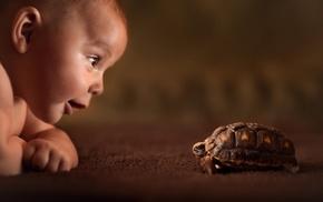 animals, tortoises, baby