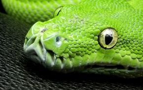 pattern, nature, wildlife, reptile, closeup, snake