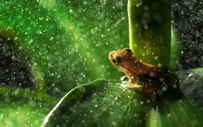 leaves, water drops, macro, amphibian, frog, animals