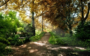 bench, path, sunlight, shadow, dirt road, nature