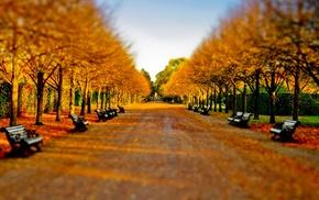 landscape, tilt shift, trees, leaves