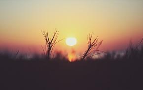 nature, Sun, macro, plants, sunset, depth of field