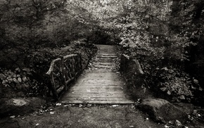 forest, bridge, trees, nature, photo manipulation