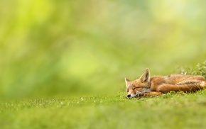 mammals, landscape, depth of field, grass, nature, sleeping