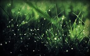 macro, water drops, grass, nature