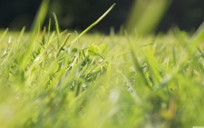 green, macro, nature, depth of field, grass, clovers