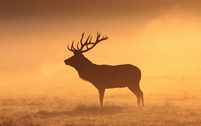 field, grass, deer, silhouette, mammals, stags