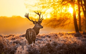animals, sunlight, landscape, deer, mammals, nature