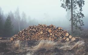 mist, log, nature, landscape, photography, forest