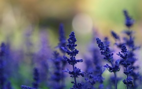 flowers, depth of field, macro, purple flowers, lavender, nature