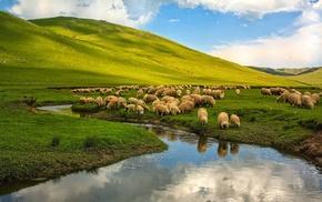 Turkey, sheep, animals, landscape, nature, river