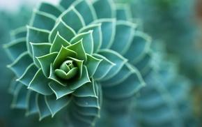 nature, succulents, depth of field, plants, macro