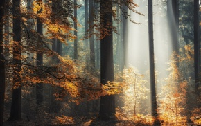 forest, leaves, landscape, sunlight, fall, nature