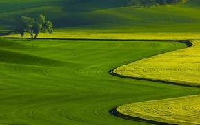 nature, field, landscape, green, hill, trees