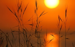 silhouette, reeds, Sun, nature, sunset