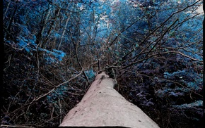 forest, blue, plants, photo manipulation, trees