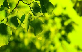 bokeh, nature, leaves, green