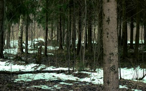 snow, forest, trees, Russia