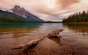 forest, Canada, landscape, lake, trees, dead trees