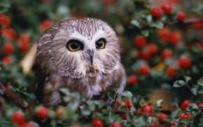 baby animals, owl, depth of field, animals, nature, leaves