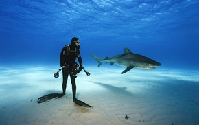 animals, divers, nature, sea, shark, underwater