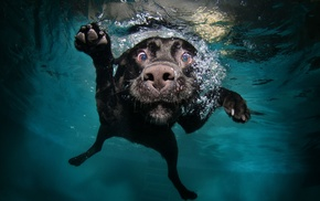 muzzles, underwater, animals, bubbles, water, dog