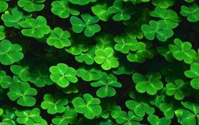 nature, Shamrock, plants, leaves, pattern, green