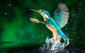 kingfisher, splashes, water, birds