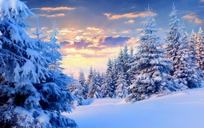 trees, forest, winter, sunset, landscape, nature