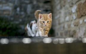 blurred, bokeh, animals, cat