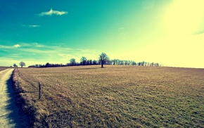 trees, field, landscape, nature, filter, bright