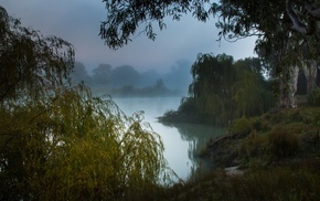 nature, landscape, morning, trees, mist, Australia