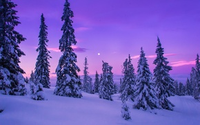 winter, landscape, nature, snow, forest