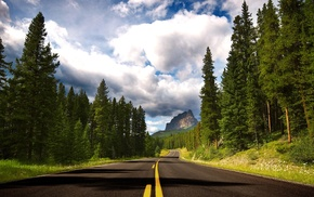 forest, pine cones, road, nature, pine trees, landscape