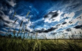 nature, grass, plains, landscape