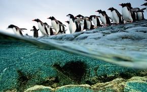 birds, wildlife, penguins, animals, split view, sea